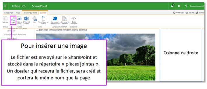 Insertion d'image sous SharePoint Online